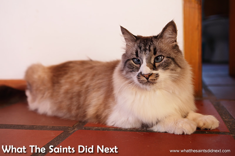 """One of Diane's """"cultured kitties."""""""