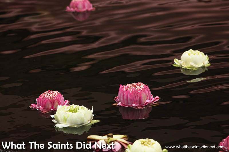 Floating lotus' carry hopes in the wishing pond.