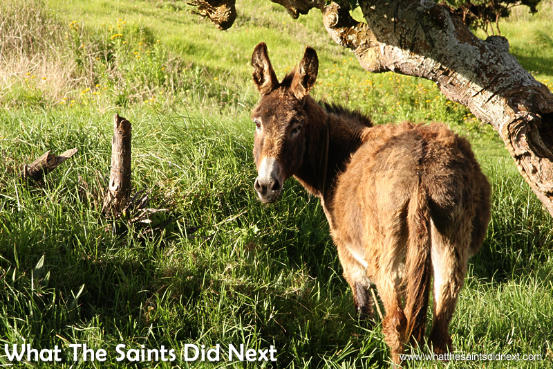 Donkeys were once used in their hundreds, but have now been mostly retired.