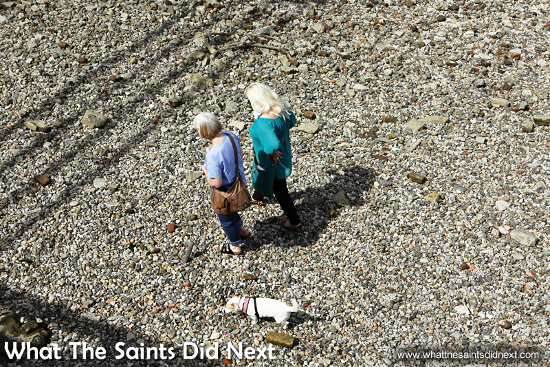 Dog walking along the pebble shores of the River Thames, in London, at low tide.