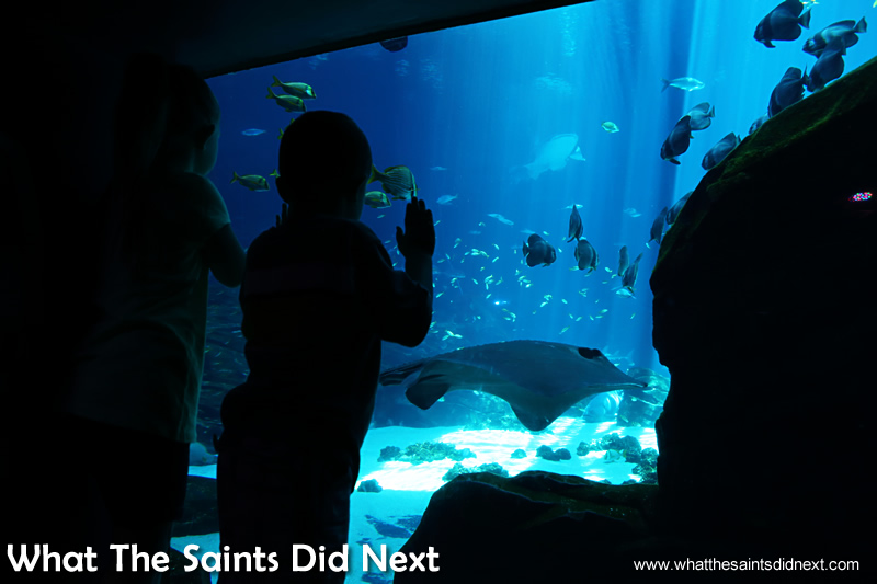 A youngster is captivated by the giant fish at Georgia Aquarium.