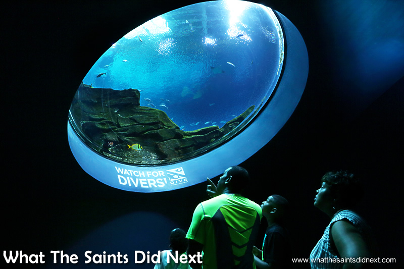 The large array of tanks and viewing windows make Georgia Aquarium one of the best in the world.