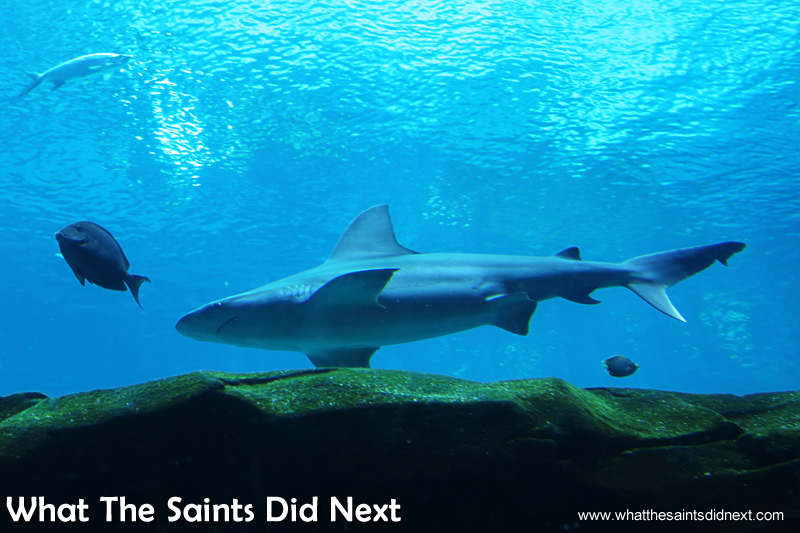 Sharks are always a popular sighting in the Aquarium.