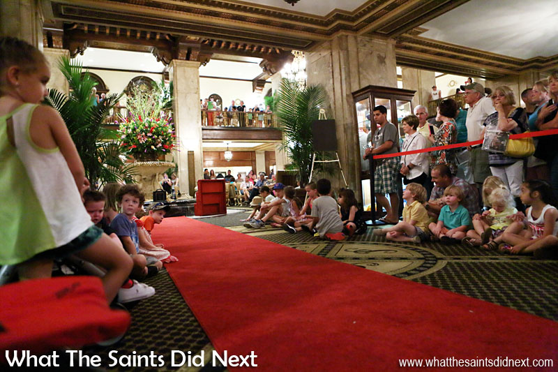 Everyone is in position, the red carpet is down, we are ready for the march of the Peabody Ducks.