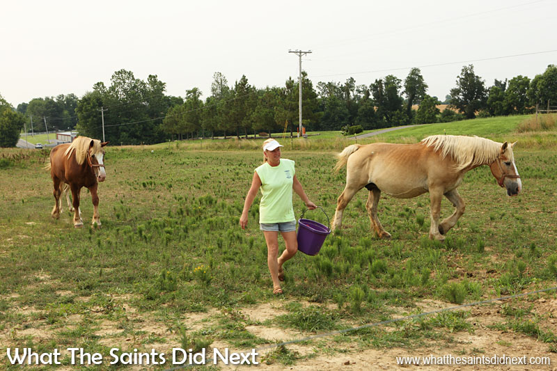 Fancy Farm, Kentucky. Stephanie goes out with some feed to tempt the horses closer for our camera.