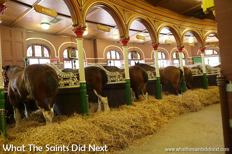 The Budweiser Clydesdale horses live in very smart stables on the brewery premises.