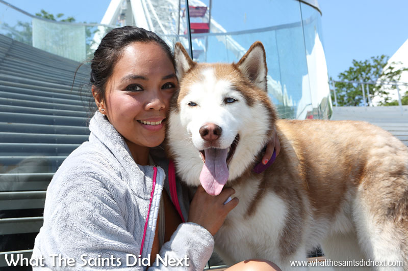 Nurse Mitzi with her Siberian Husky on Navy Pier in Chicago. Mitzi recommends Navy Pier as the place for visitors to see in the city.