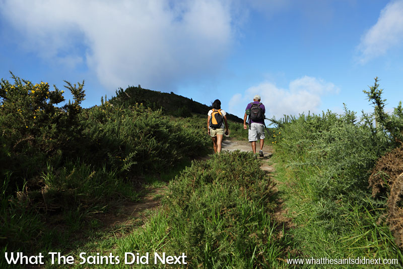 The road nearer the top of the Flagstaff Post Box walk is lined by the vicious furze bushes. Furze on St Helena are one of the most awkward invasive plants to remove because of their sharp spikes.