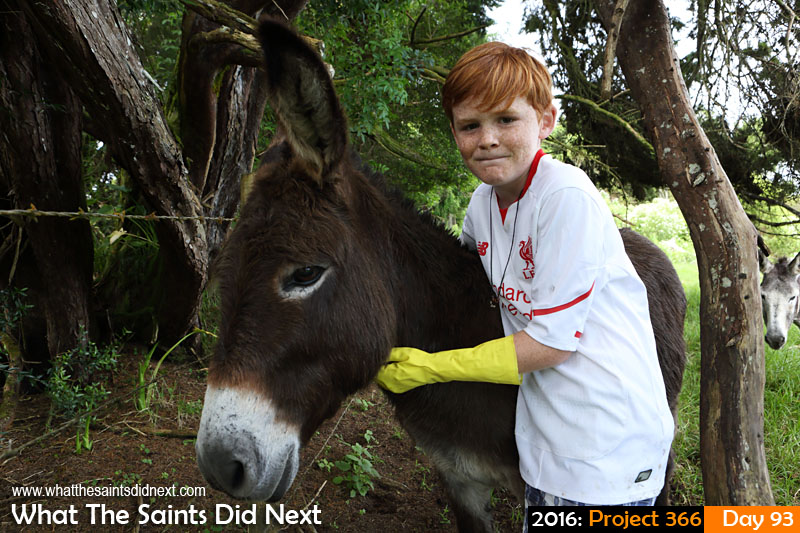 'Malawi' 2 April 2016, 09:45 - 1/125, f/8, ISO-400 What The Saints Did Next - 2016 Project 366 Visiting the St Helena Donkey Home.