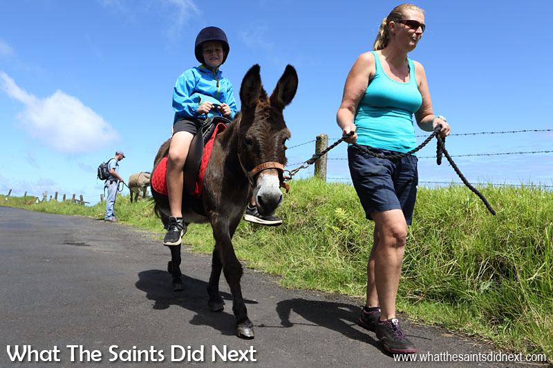 Sharon leading Shim who is saddled for donkey rides. Only riders under 8 stone are allowed on. St Helena Donkey Home.