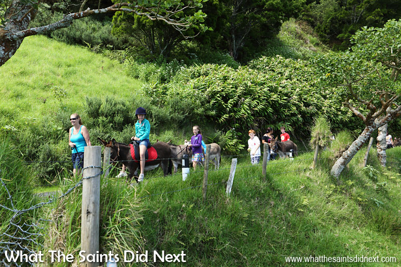 The lush green countryside of Blue Hill and Casons is a beautiful setting for walking the donkeys. St Helena Donkey Home.
