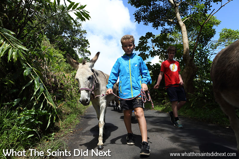 The St Helena Donkey Home donkeys are extremely gentle and are easily handled by the children. It's a superb way to get kids outdoors and active.