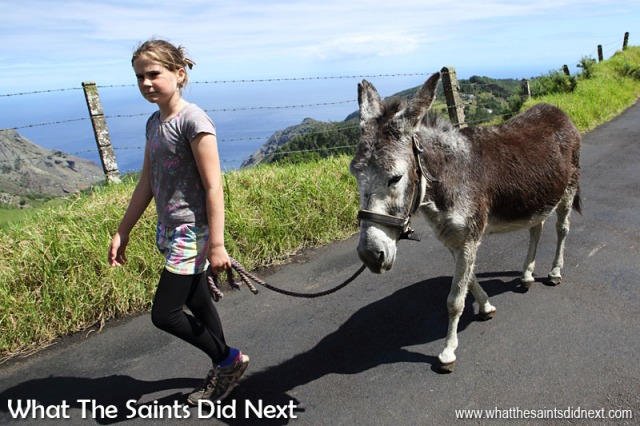 Grace (Helen's daughter) is another regular at the St Helena Donkey Home and clearly has an close connection with the animals.