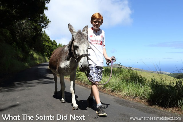 Matthew (Helen's son) knows every last detail about each of the donkeys; he is another who gives up every Saturday to help at the St Helena Donkey Home.