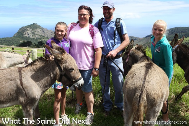 The Stronkhorst family (l-r) Engela, Ronel, Pieter and Emke were visiting from South Africa. They blog about their holidays that are usually taken at 'off the beaten track' destinations. The St Helena Donkey Home.