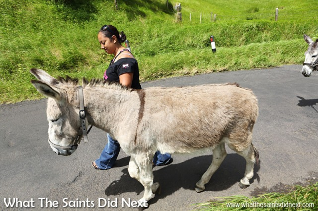 Saturday walking at the St Helena Donkey Home has become a regular thing for Kylie Peters and her family.