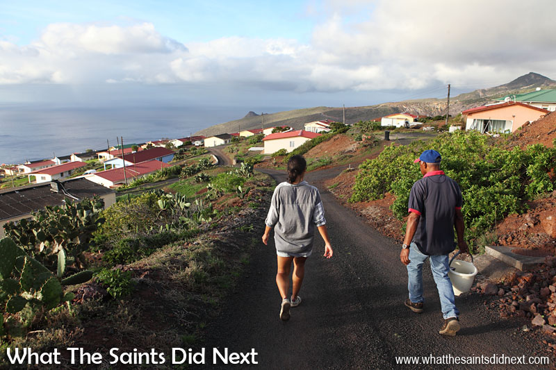 Walking back down into the residential part of Half Tree Hollow, a bucket full of tungis taking home with us. It's easy to take for granted the amazing Atlantic Ocean views we have on St Helena. Off in the distance to the right is the peak of Flagstaff, and to the left is Sugar Loaf.