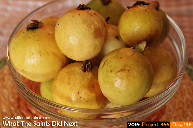 'Nice' 14 July 2016, 14:18 - 1/125, f/8, ISO-200 What The Saints Did Next - 2016 Project 366 Bowl of guava fruit.