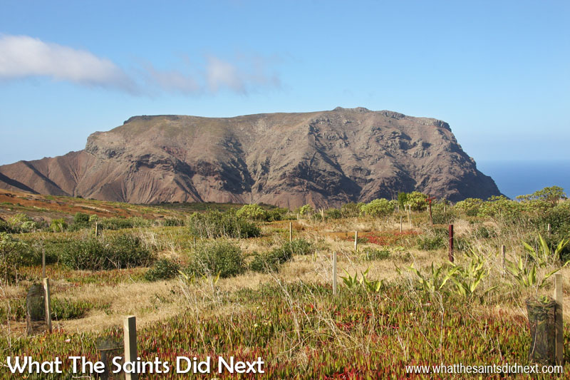 The Barn, St Helena. This view of the Barn from the Millennium Forest area shows how rugged and difficult the 'rock' is to climb. The knife edge ridge can be seen to the left of the frame.