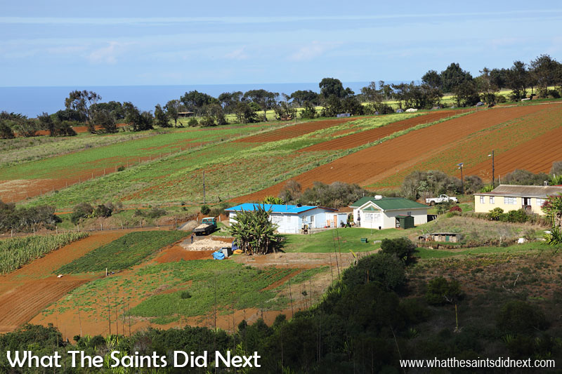 A patchwork of fields surrounds Longwood which grows the majority of St Helena's local vegetable produce.