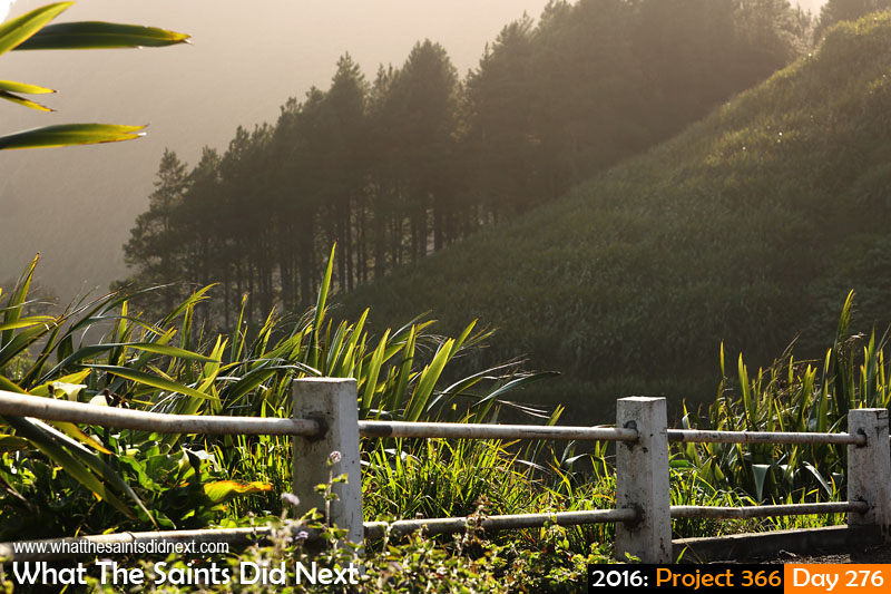'Razor thin' 2 October 2016, 16:53 - 1/500, f8, ISO-200 What The Saints Did Next - 2016 Project 366 New Zealand flax on the landscape of Sandy Bay, St Helena.