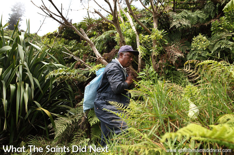 Denzil George carrying the seedlings up onto the peaks to be planted. Diana's Peak National Park, St Helena Island.