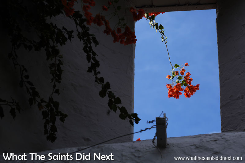 St Helena Tour in Pictures Framed flowers - bougainvillea at the Castle in Jamestown.