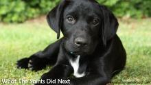 Dog training on Plantation Lawn. New Dogs, Old Tricks - Dusty's Dozen.