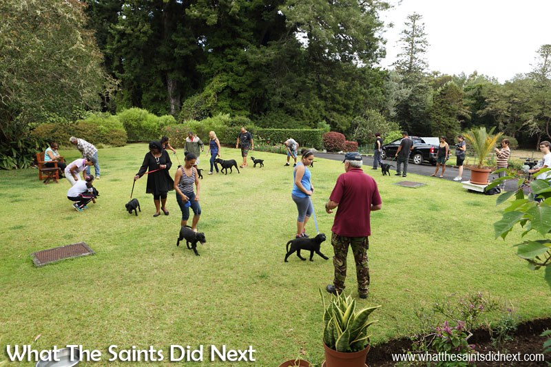 Walking on the lead, first steps to becoming a good little citizen. New Dogs, Old Tricks - Dusty's Dozen.