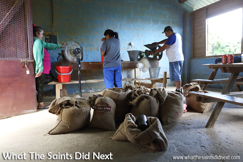 Coffee workers busy hulling and polishing the beans at ANRD, Scotland. St Helena Coffee by Solomon & Co.