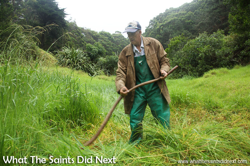 Cyril Legg, in Levelwood scything grass to feed 15 sheep, 5 goats and 1 cow. Time-Lapse St Helena: Cyril Legg